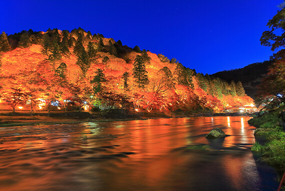 Autumn Leaves Light-up Tour in Korankei