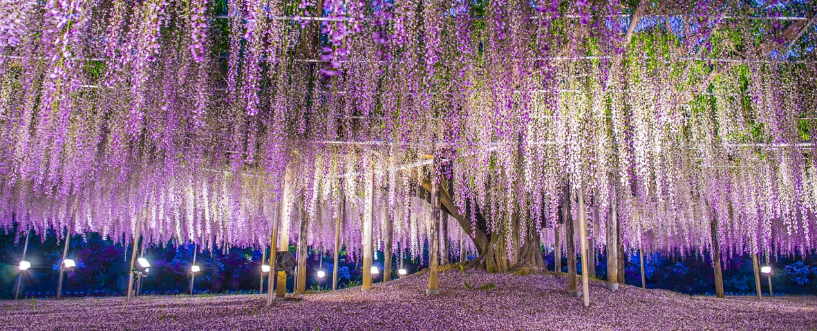1-day Ashikaga Flower Park & Hitachi Seaside Park tour